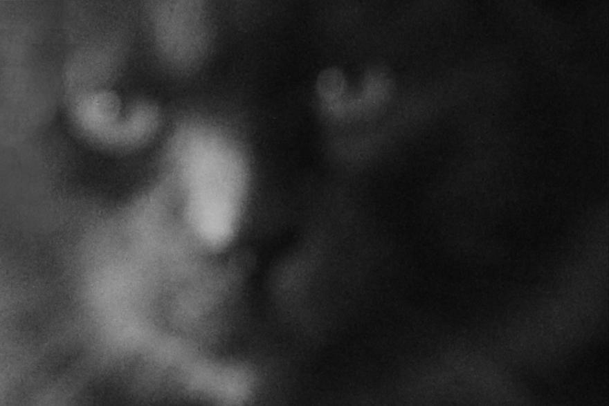 cats flou2.png